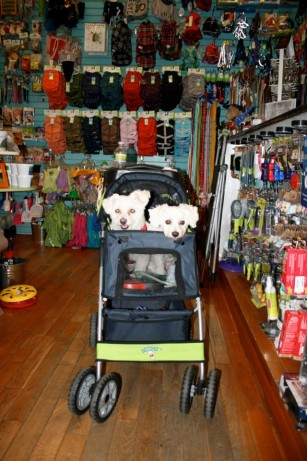 Lily and Lucy in their stroller