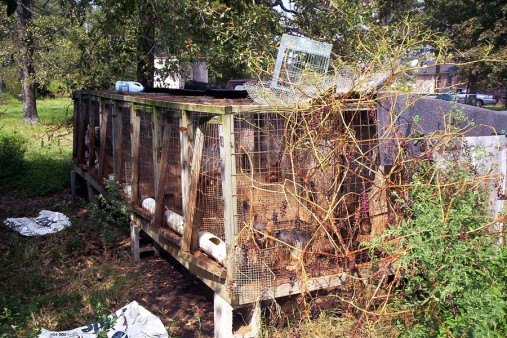 A typical puppy mill enclosure