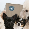 Greenport Harbor Brewing Co. Yappy Hour