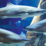Enjoy National Aquarium Month at Long Island Aquarium in Riverhead