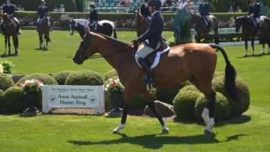 Opening day at Hampton Classic Horse Show.