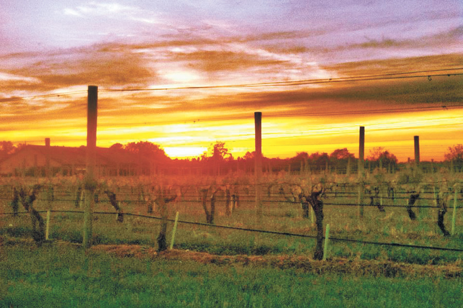 A gorgeous Wolffer sunset during Yoga in the Vines