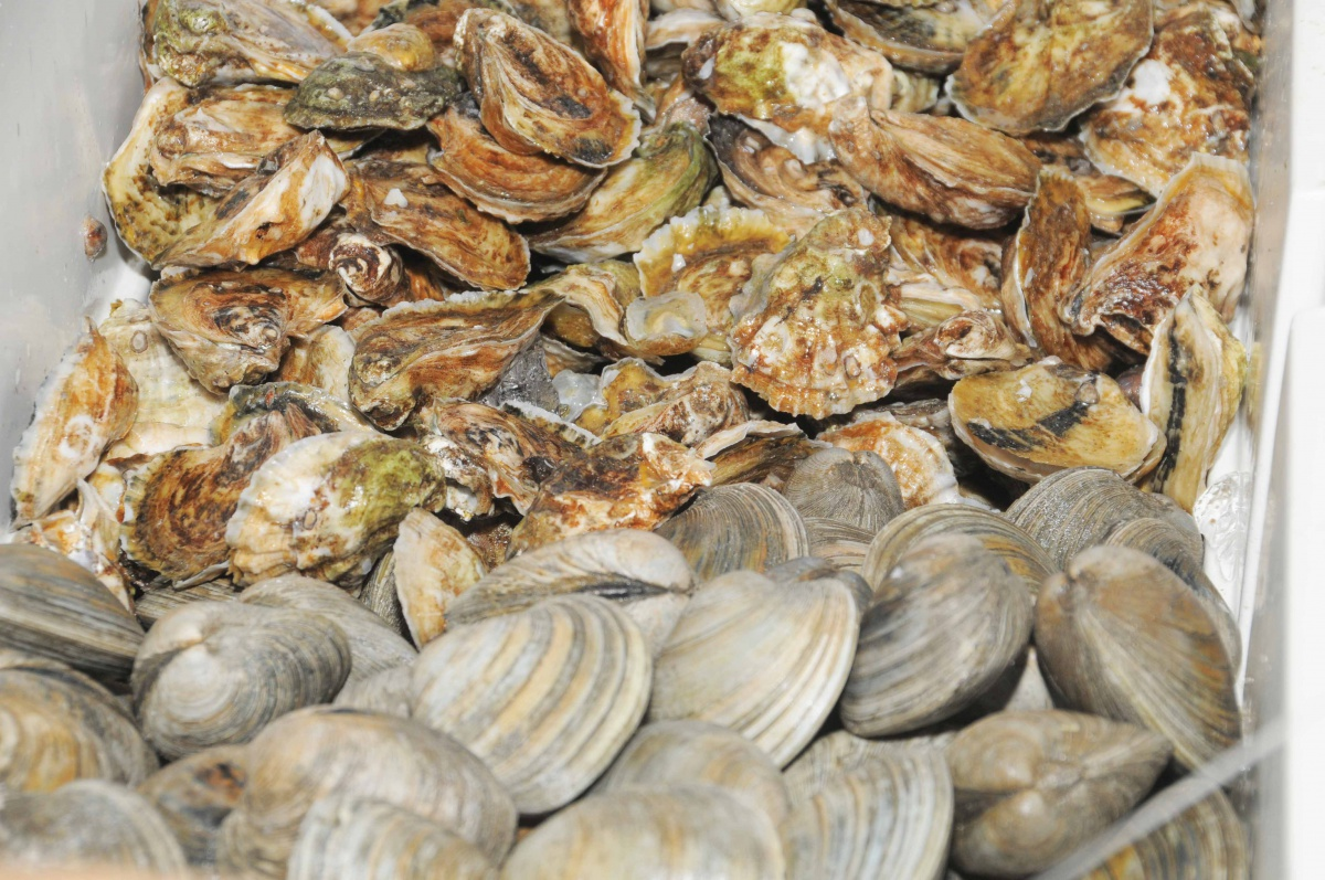 A local bounty of oysters and clams.