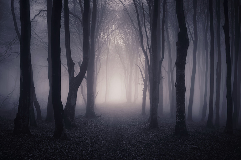 46723702 - path trough a dark mysterious forest with fog on halloween