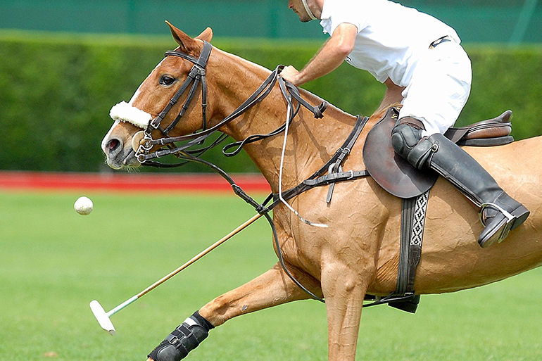 action polo match, one player.