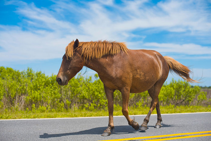 Don't test your horse's speed on the street