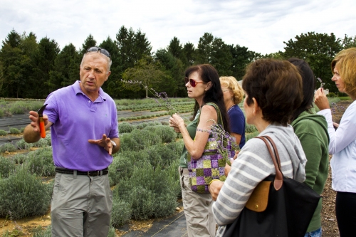 Serge Rozenbaum, owner of Lavender by the Bay in East Marion, treats guests to a guided tour of one of the largest lavender farms in the country, at the 6th Annual Foodie Tour on Long Island's North Fork this past Sunday.