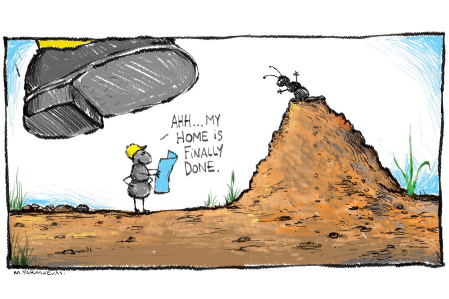 Ant Cartoon By Mickey Paraskevas