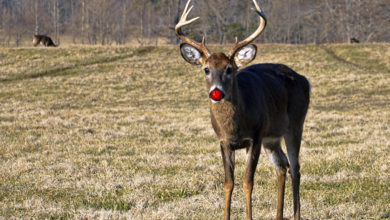 A red nose will solve the Hamptons deer problems