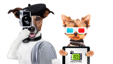 Dog Film Festival is coming to the Hamptons!