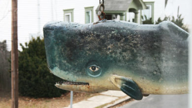 A whale still lives in Greenport