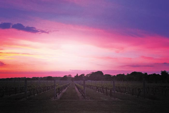Another epic Hamptons sunset at Wolffer Estate Winery