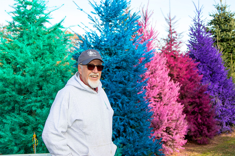 Ed Dart with his colored trees at Dart's Tree Farm