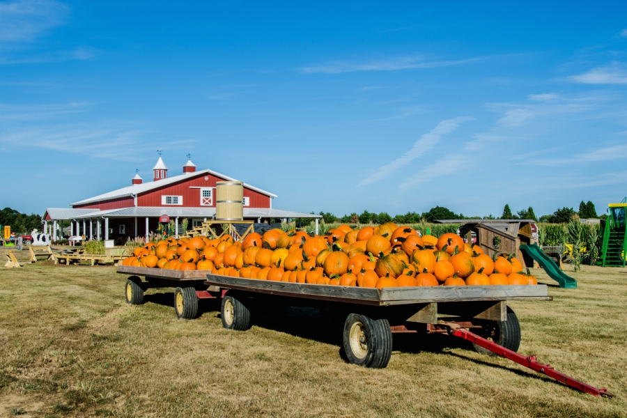 Hank's Pumpkintown in Water Mill is a favorite stop for kids and families come fall