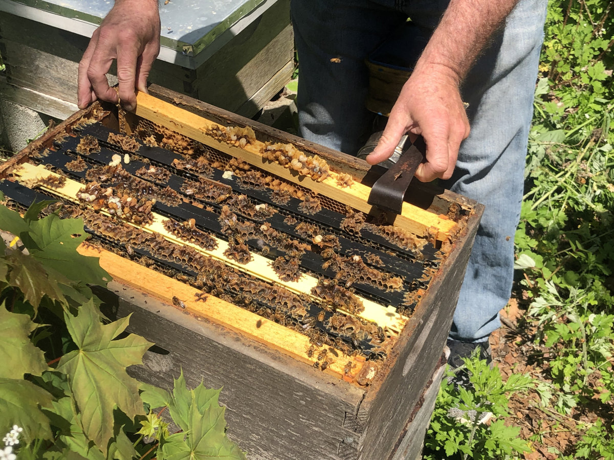 Christopher Kelly of the East End School of Beekeeping with some of his little, buzzing bee friends.
