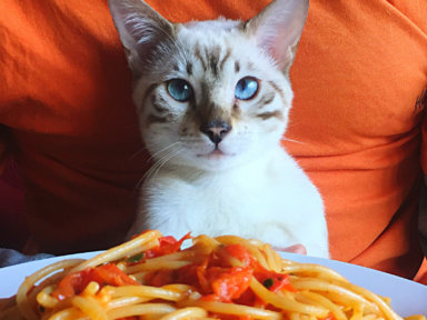 At the Spay-ghetti Fundraiser, you can purchase spaghetti dinners to help East End cats—what a sweet deal!